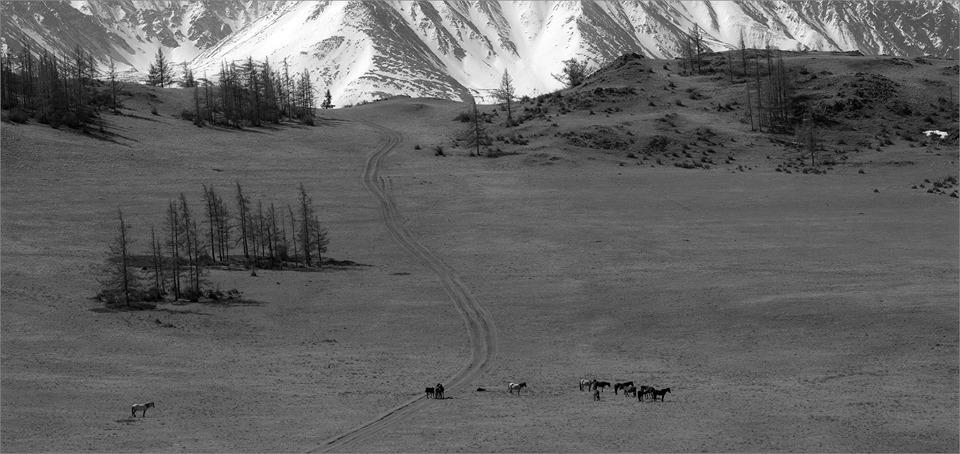 У дороги в горы пасутся кони.