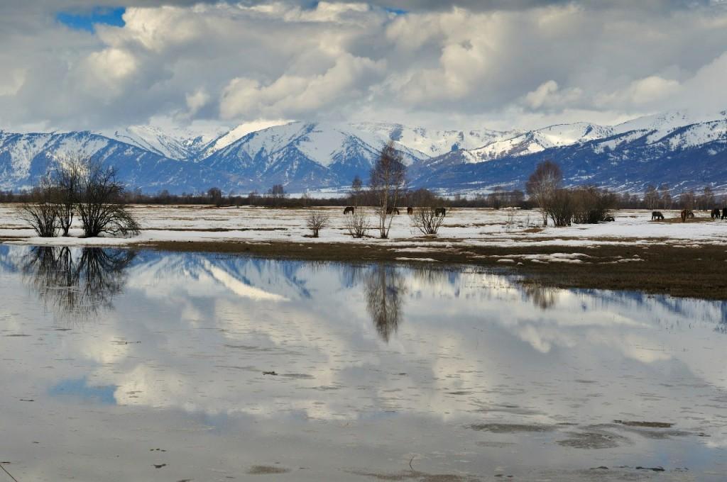 Уймонская долина. Разлив Катуни весной. Фото: Вячеслав Левицкий