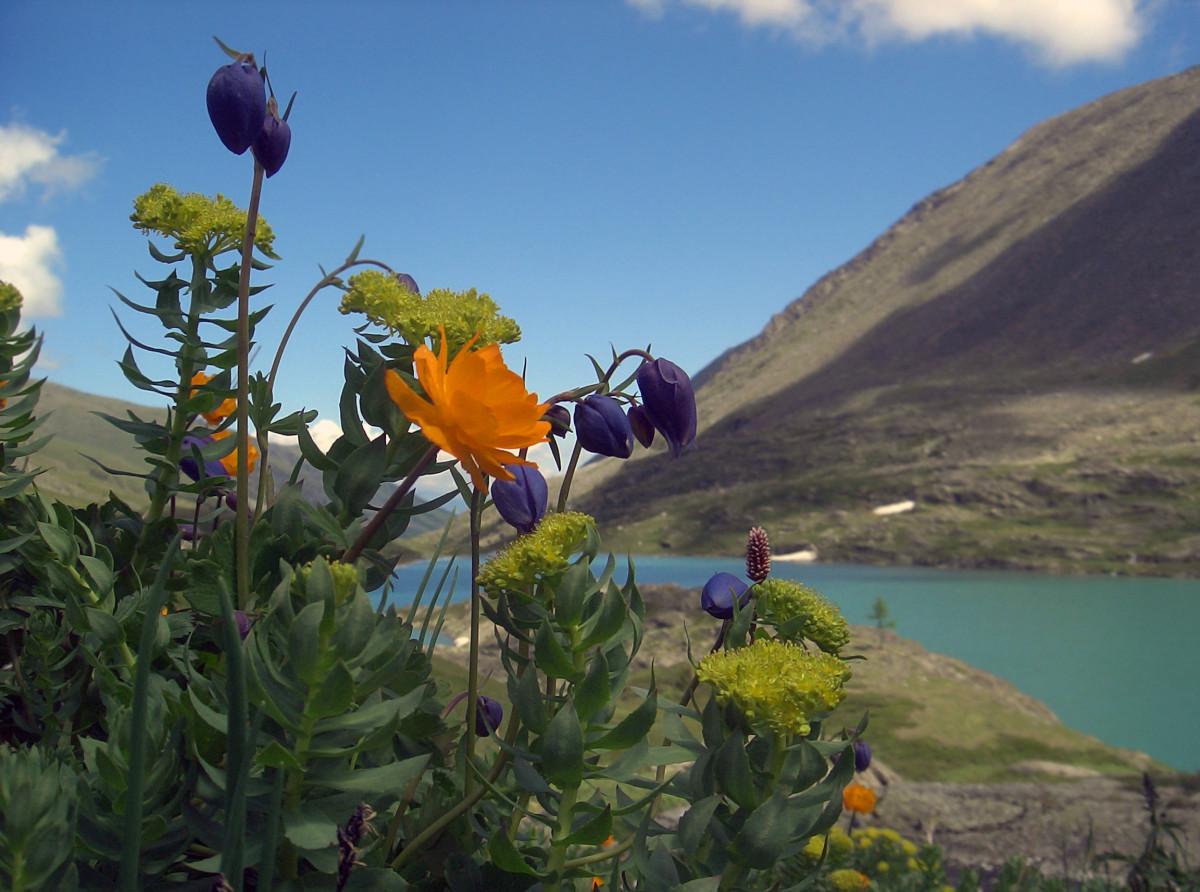 Альпийский луг у озера Акчан. Фото: Айю