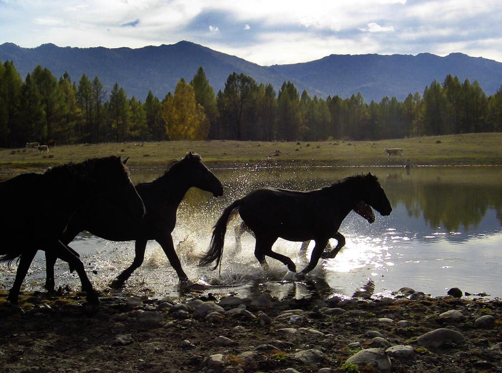 Кони в окрестностях Мульты. Фото: Айю