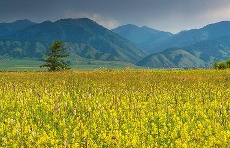 Уймонская долина. Фото: Павел Филатов