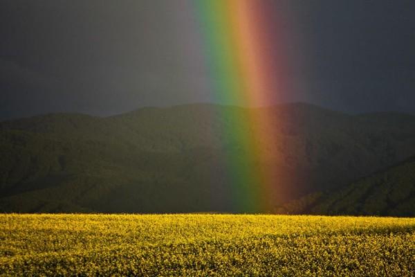 Радуга в Уймонской долине. Фото: Алексей Саламатов