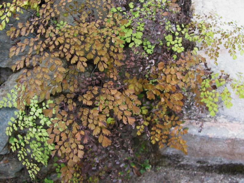 Зимние растения в предгорьях Гималаев