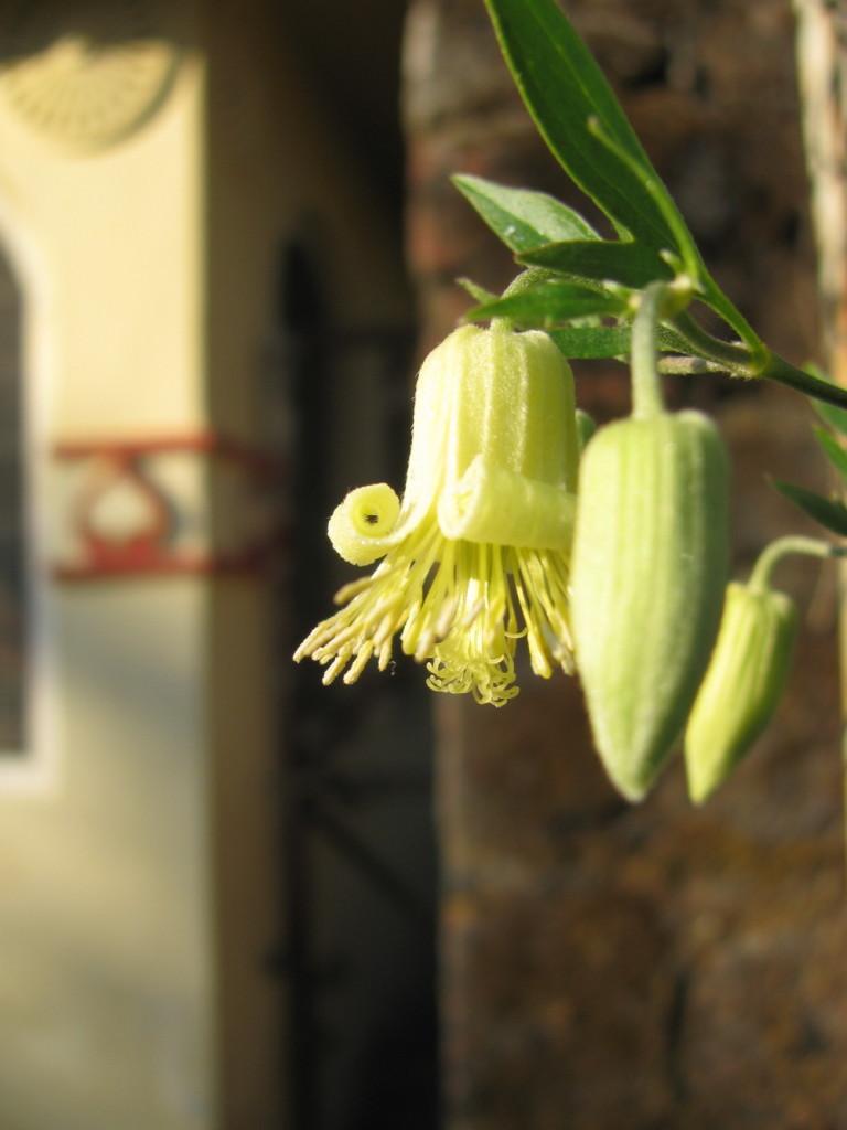 Зимние цветы в предгорьях Гималаев