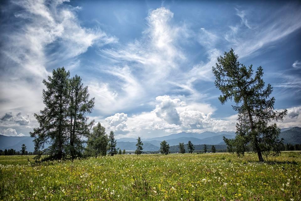 В Уймонской долине. Фото: Андрей Кузнецов