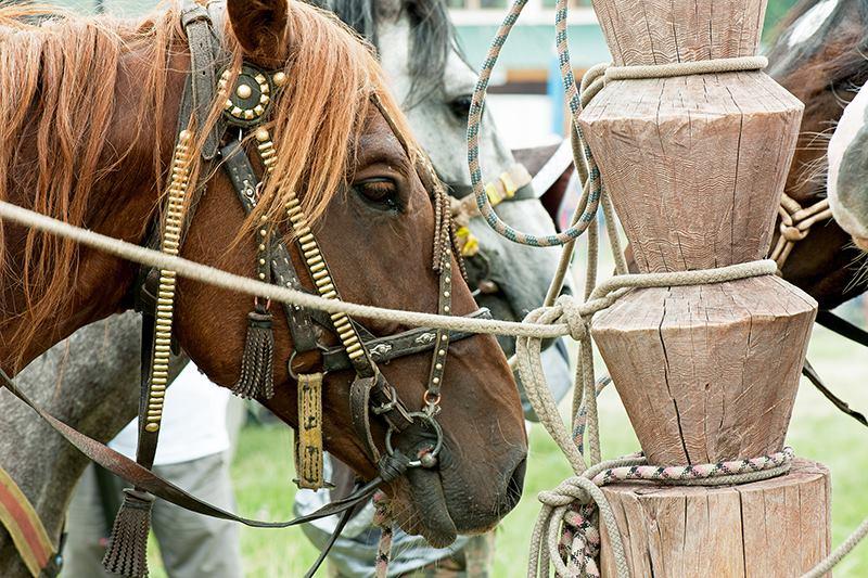 Лошадь привязанная к традиционной алтайской коновязи. Фото: Андрей Клюев