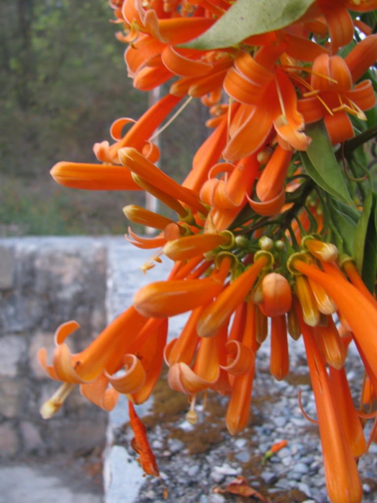 Цветы в дхамма-центре в декабре. Дехрадун, Северная Индия